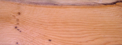 Typical piece of yew with fine grain, small knots